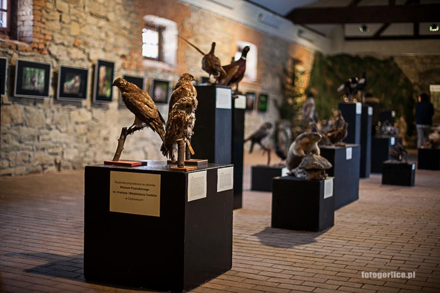 Natura Beskidu - wystawa